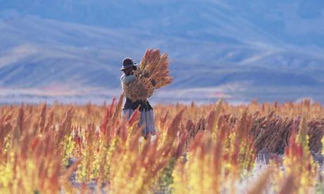 Quinoa-harvest-in-Bolivia-008.jpg