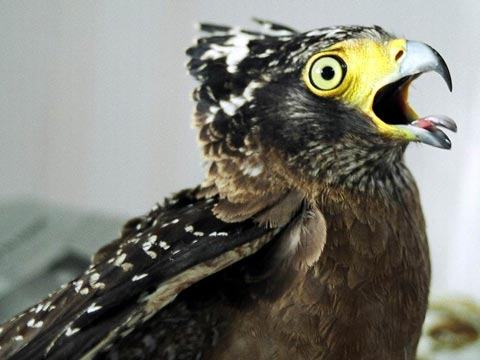 Serpent-Eagle.jpg