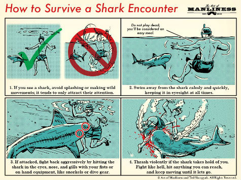 Shark-Encounter-1.jpg