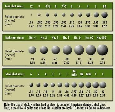Shot-Size-Chart-Scaled.jpg