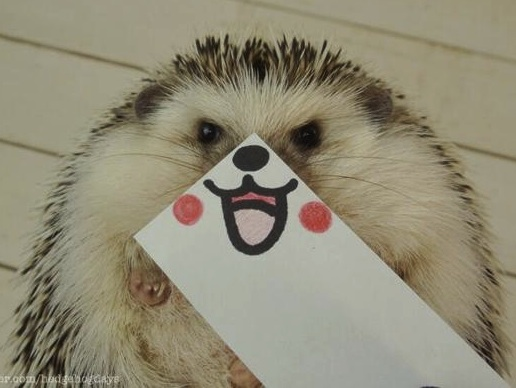 SmilingHedgehog.jpg