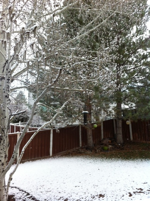 SnowMarch11.jpg