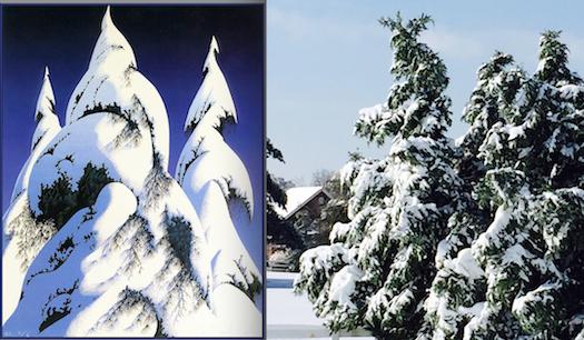 SnowyTrees.jpg