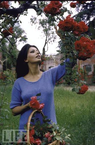 Sophia_loren_1964.jpg