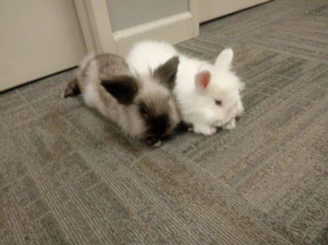 Thumper and Snowball.jpg