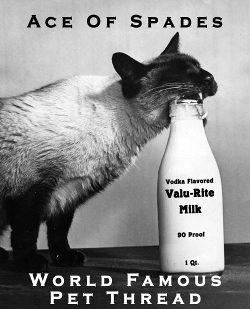 Valu-Rite Milk Cat.jpg