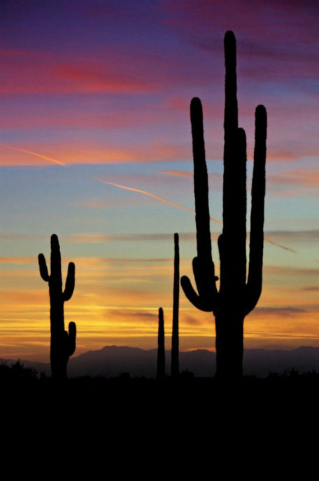 above fold sunset desert .jpg