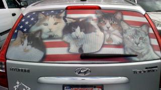 americats-500x281.jpg.png