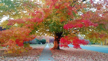 autumn-i-new-england.jpg