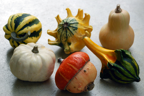 autumn_flower_arrangement_gourds.jpg