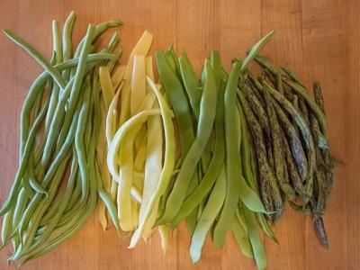 beans-four-typess.jpg