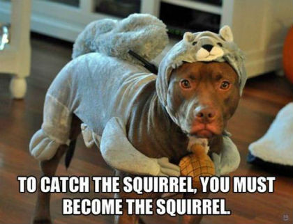 become-the-squirrel.jpg