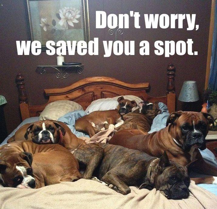 bed-full-of-dogs.jpg