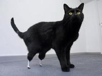 bioniccat567.jpg