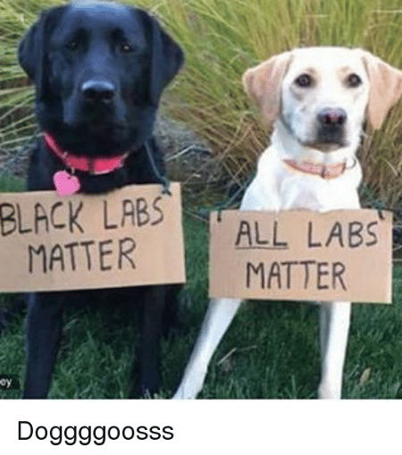 black-labs-all-labs-matter-matter-doggggoosss-3094041.png