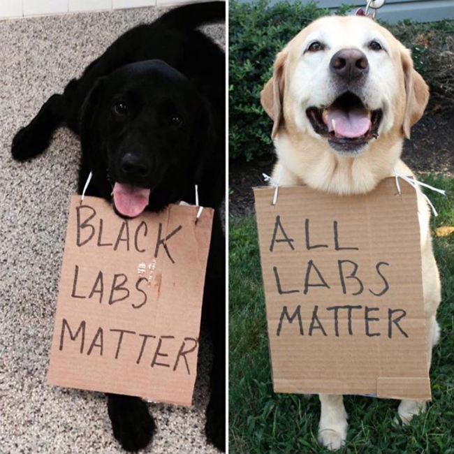 black-labs-matter.jpg