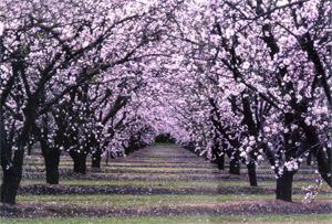 blossomtrail.jpg