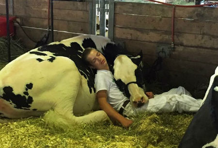 boy-cow-take-nap-together-mitchell-miner-iowa-state-fair-coverimage.jpg