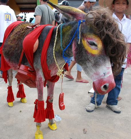 burrocrop.JPG