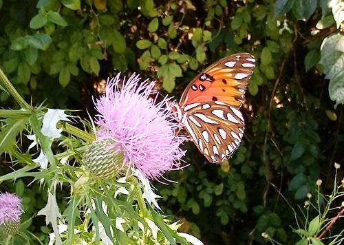 butterfly-under.jpg