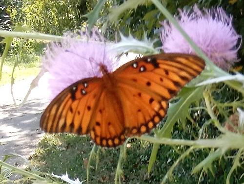 butterfly-upper.jpg