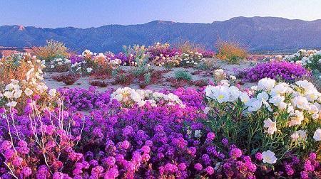 california-desert-2017-3.jpg