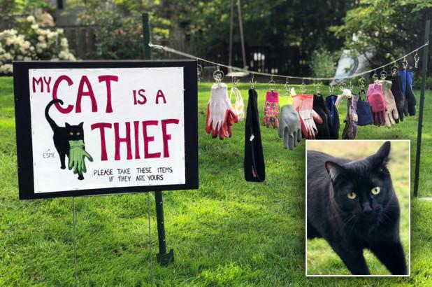 car-thief-hp.jpg