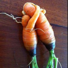 carrote.jpg