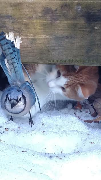 cat and bird.jpg