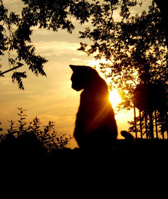 cat-and-sunset.jpg
