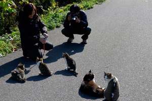 cat-island-japan-tourists-650x433.jpg