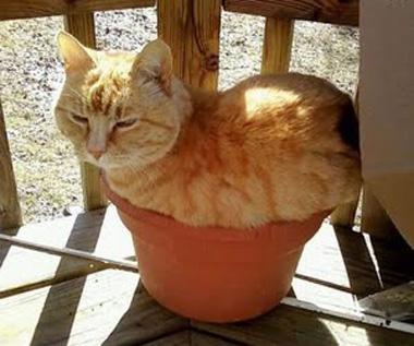 cat-sleeping-in-flower-pot.jpg