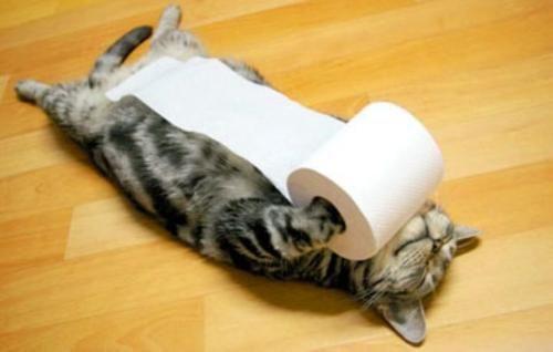 cat-tp.jpeg
