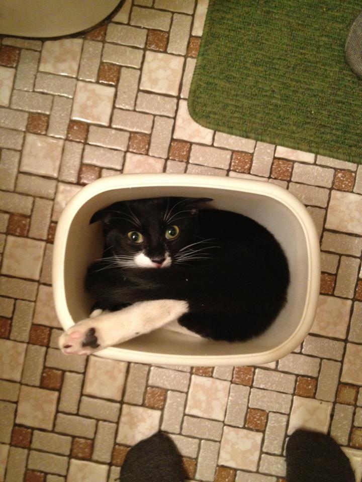 cat-trash.jpg
