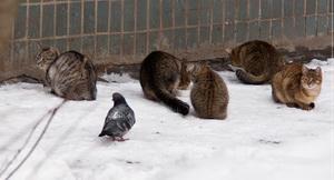 cat_pigeon.jpg
