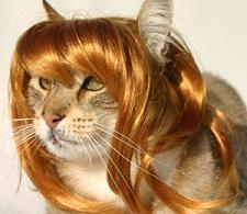 cat_wig.jpg