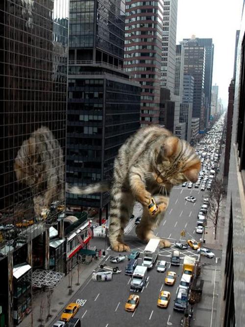 catattackcity.jpg