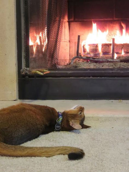 catfireplace.jpg