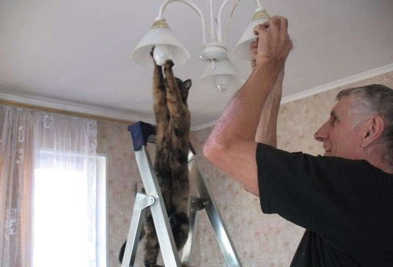 catlight.jpg