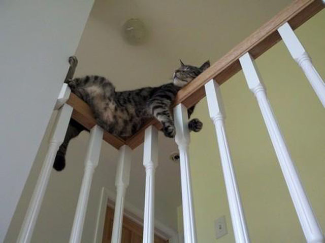 cats-sleeping-weird-places-stairs-railing.jpg