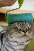 caturday23_sm.jpg