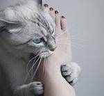 caturday_foot.jpg