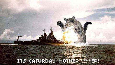 caturdaymotherfucker,jpg.JPG