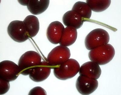 cherry_twi.jpg