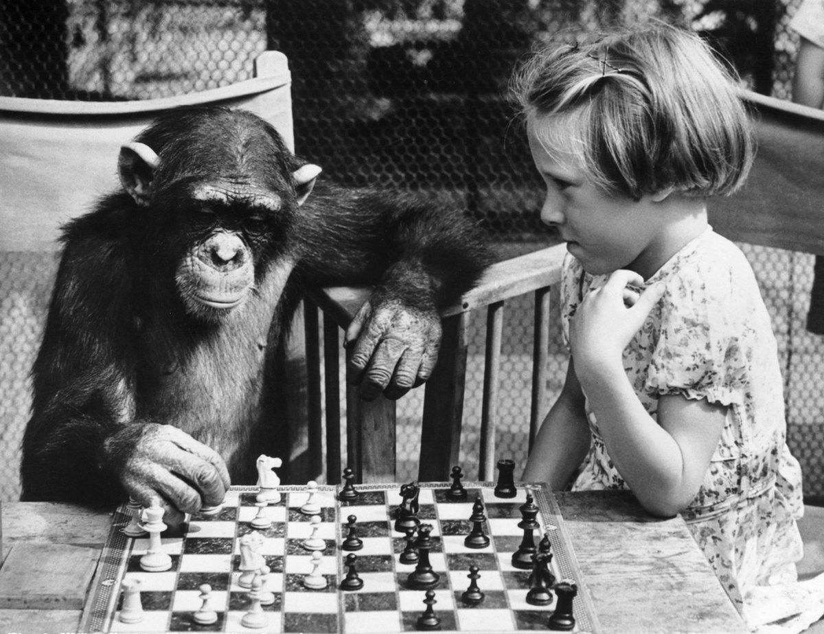 chess - chimp 2.jpg