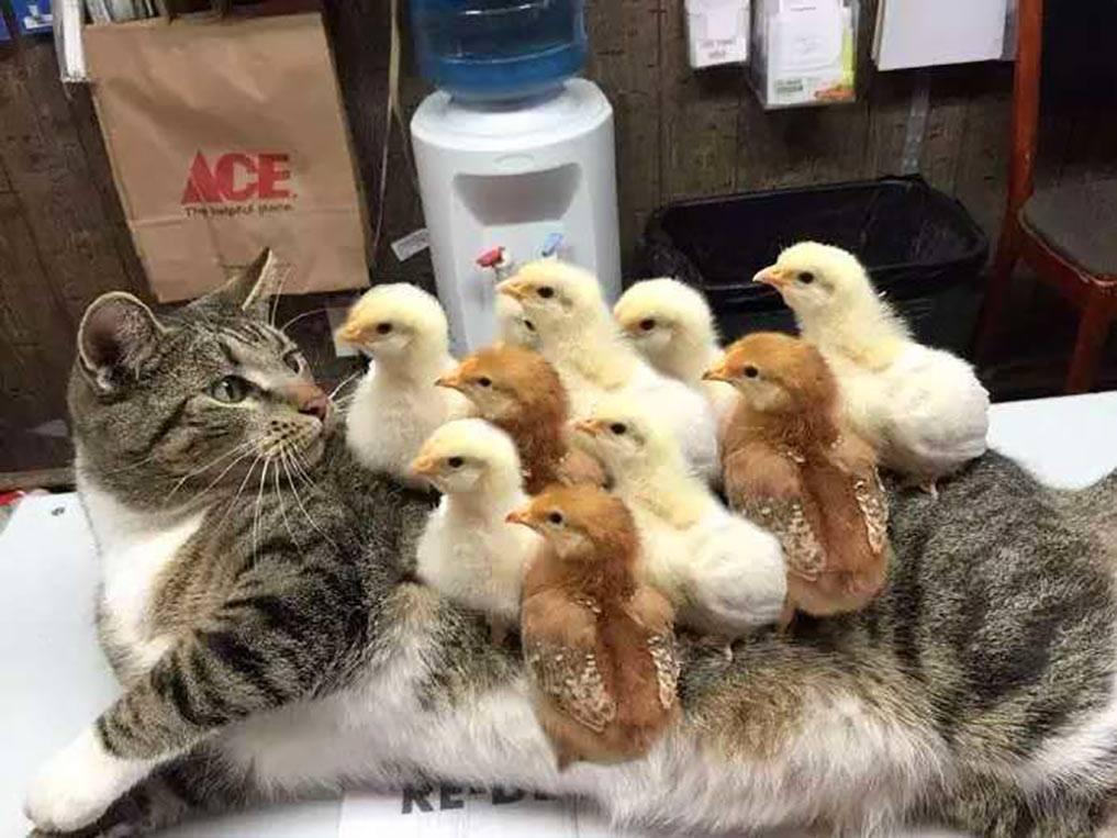 chickenpox.jpg
