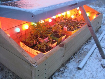 cold frame lights.jpg