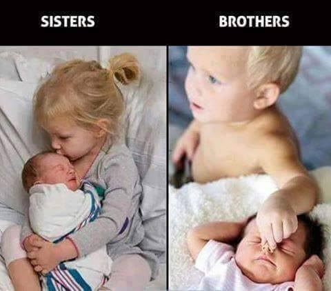 compare and contrast - sisters and brothers.jpg