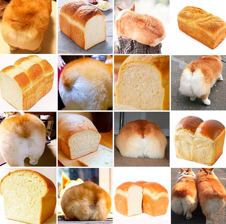 corgi butts or bread.jpg