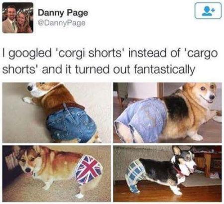 corgishorts.jpg